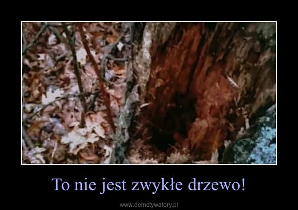 To nie jest zwykłe drzewo! –