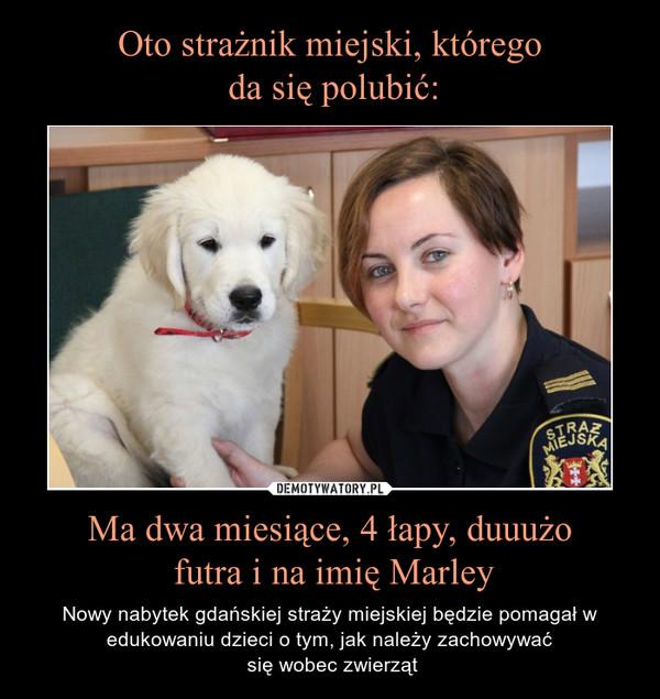 Ma dwa miesiące, 4 łapy, duuużo futra i na imię Marley – Nowy nabytek gdańskiej straży miejskiej będzie pomagał w edukowaniu dzieci o tym, jak należy zachowywać się wobec zwierząt