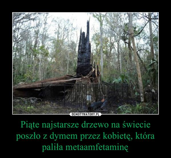 Piąte najstarsze drzewo na świecie poszło z dymem przez kobietę, która paliła metaamfetaminę –