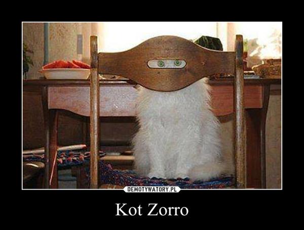 Kot Zorro –