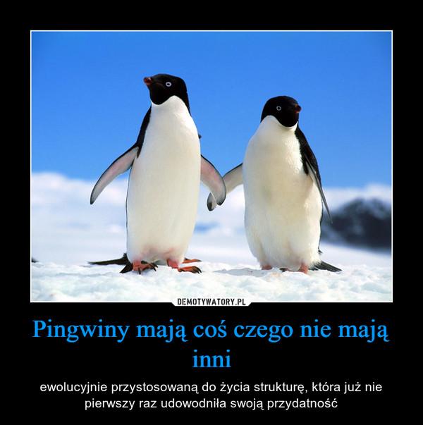 Pingwiny mają coś czego nie mają inni – ewolucyjnie przystosowaną do życia strukturę, która już nie pierwszy raz udowodniła swoją przydatność