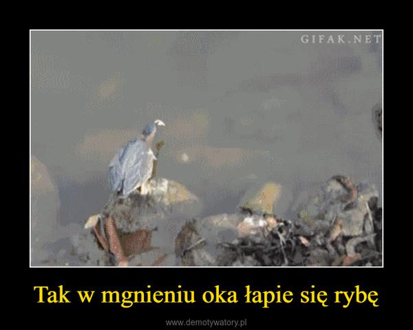 Tak w mgnieniu oka łapie się rybę –