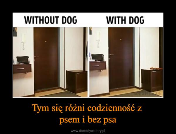 Tym się różni codzienność z psem i bez psa –