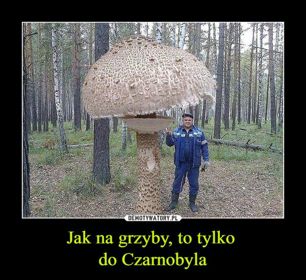 Jak na grzyby, to tylko do Czarnobyla –
