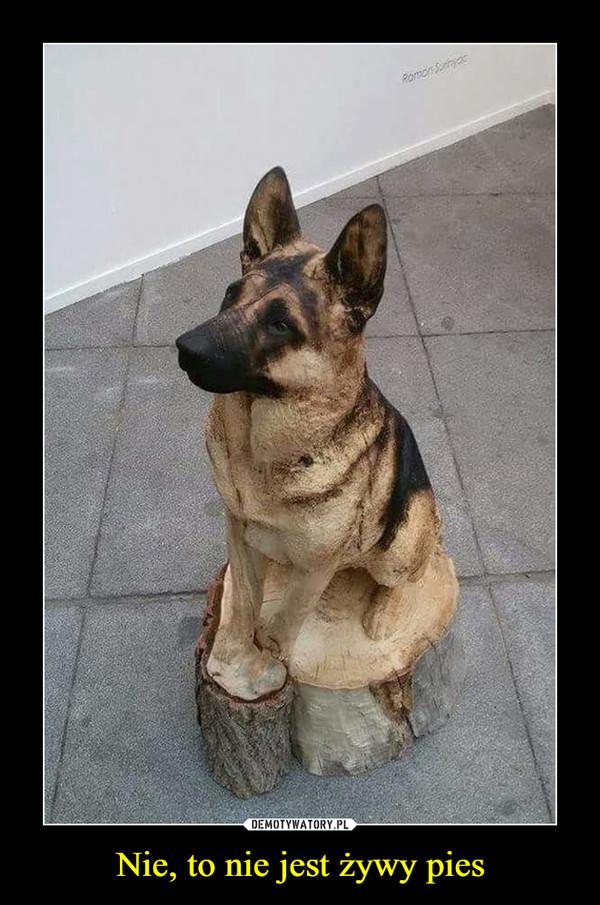 Nie, to nie jest żywy pies –
