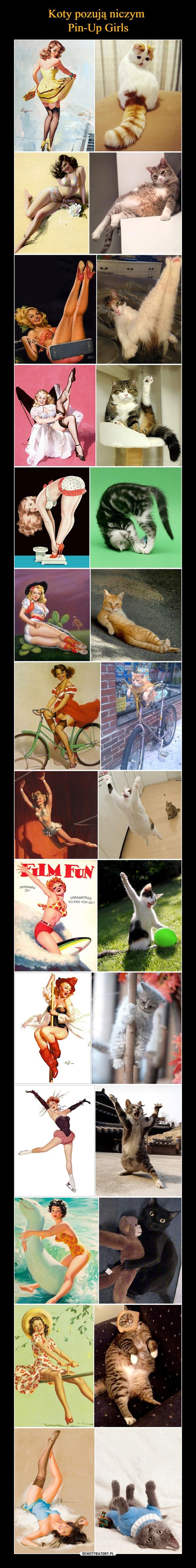 –  Film Fun