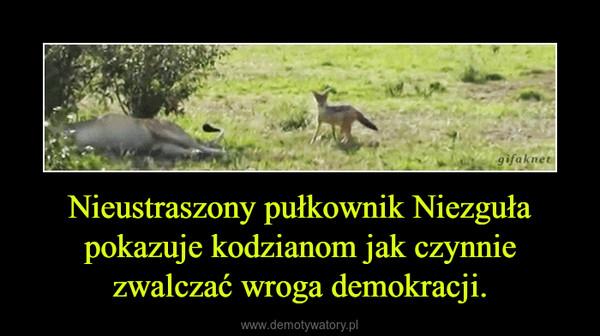 Nieustraszony pułkownik Niezguła pokazuje kodzianom jak czynnie zwalczać wroga demokracji. –