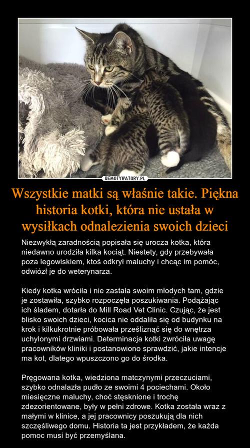 Wszystkie matki są właśnie takie. Piękna historia kotki, która nie ustała w wysiłkach odnalezienia swoich dzieci