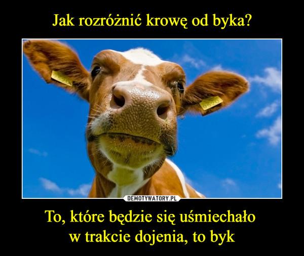 To, które będzie się uśmiechało w trakcie dojenia, to byk –