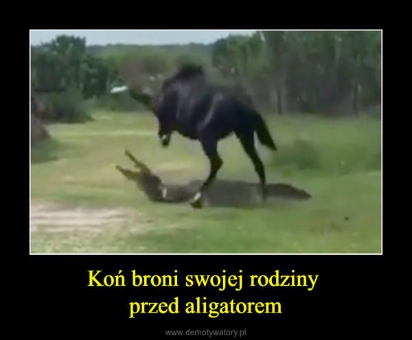 Koń broni swojej rodziny przed aligatorem –