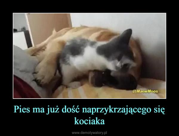 Pies ma już dość naprzykrzającego się kociaka –