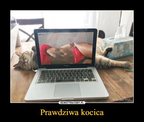 Prawdziwa kocica