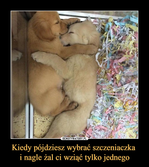 Kiedy pójdziesz wybrać szczeniaczka i nagle żal ci wziąć tylko jednego –