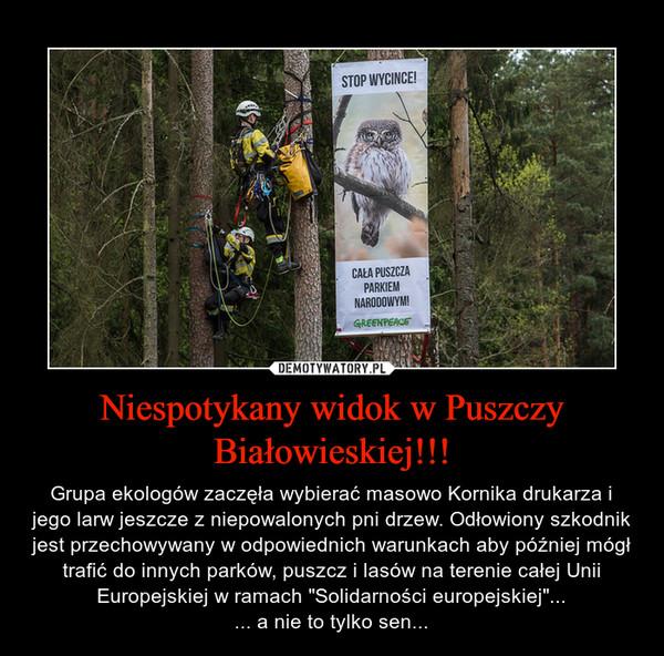 """Niespotykany widok w Puszczy Białowieskiej!!! – Grupa ekologów zaczęła wybierać masowo Kornika drukarza i jego larw jeszcze z niepowalonych pni drzew. Odłowiony szkodnik jest przechowywany w odpowiednich warunkach aby później mógł trafić do innych parków, puszcz i lasów na terenie całej Unii Europejskiej w ramach """"Solidarności europejskiej""""...... a nie to tylko sen..."""