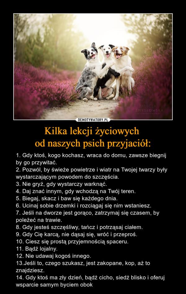 Kilka lekcji życiowych od naszych psich przyjaciół: – 1. Gdy ktoś, kogo kochasz, wraca do domu, zawsze biegnij by go przywitać.2. Pozwól, by świeże powietrze i wiatr na Twojej twarzy były wystarczającym powodem do szczęścia.3. Nie gryź, gdy wystarczy warknąć.4. Daj znać innym, gdy wchodzą na Twój teren. 5. Biegaj, skacz i baw się każdego dnia.6. Ucinaj sobie drzemki i rozciągaj się nim wstaniesz. 7. Jeśli na dworze jest gorąco, zatrzymaj się czasem, by poleżeć na trawie.8. Gdy jesteś szczęśliwy, tańcz i potrząsaj ciałem.9. Gdy Cię karcą, nie dąsaj się, wróć i przeproś.10. Ciesz się prostą przyjemnością spaceru.11. Bądź lojalny. 12. Nie udawaj kogoś innego.13.Jeśli to, czego szukasz, jest zakopane, kop, aż to znajdziesz. 14. Gdy ktoś ma zły dzień, bądź cicho, siedź blisko i oferuj wsparcie samym byciem obok