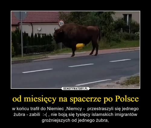 od miesięcy na spacerze po Polsce