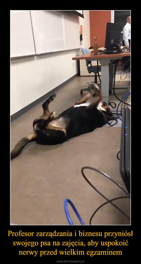 Profesor zarządzania i biznesu przyniósł swojego psa na zajęcia, aby uspokoić nerwy przed wielkim egzaminem –