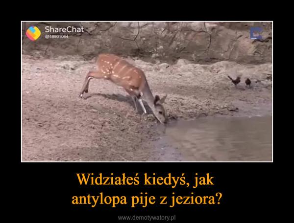 Widziałeś kiedyś, jak antylopa pije z jeziora? –