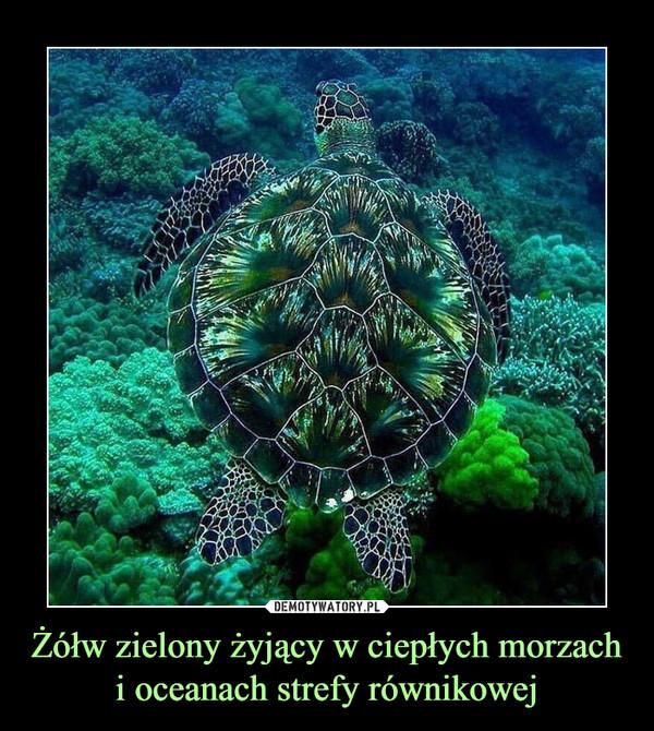Żółw zielony żyjący w ciepłych morzach i oceanach strefy równikowej –