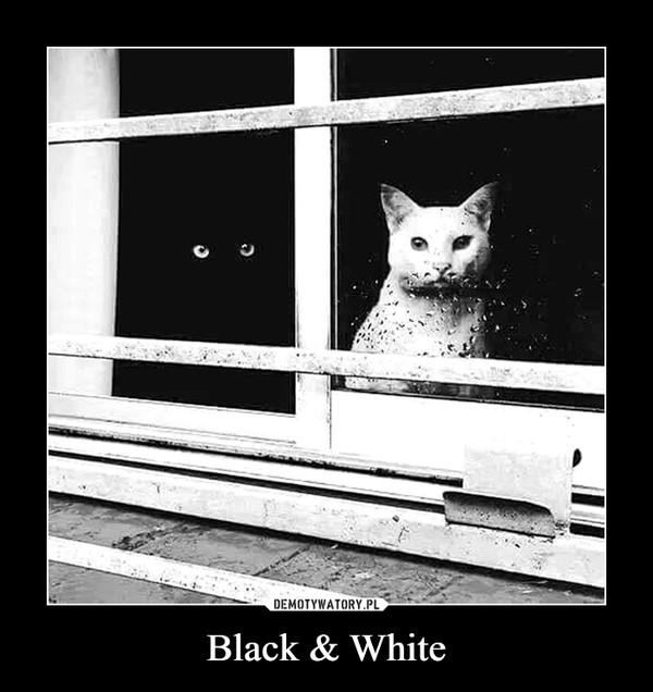 Black & White –