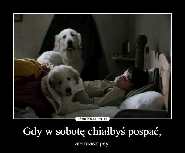 Gdy w sobotę chiałbyś pospać, – ale masz psy.