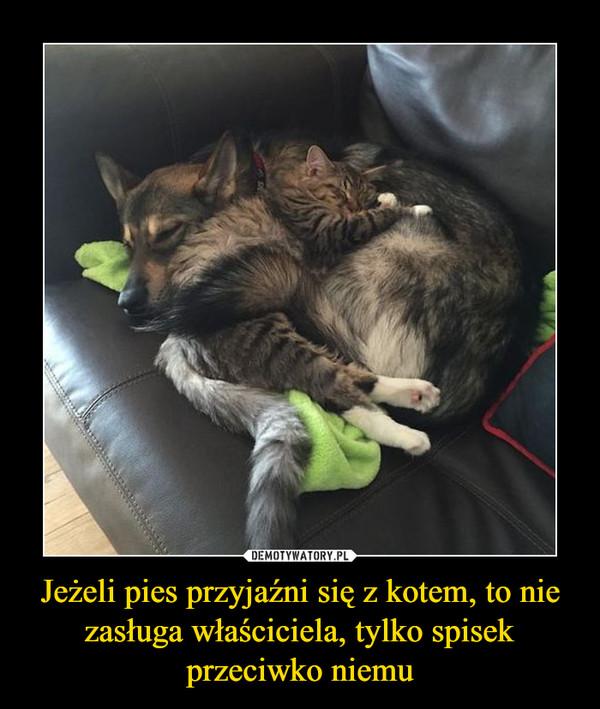 Jeżeli pies przyjaźni się z kotem, to nie zasługa właściciela, tylko spisek przeciwko niemu –