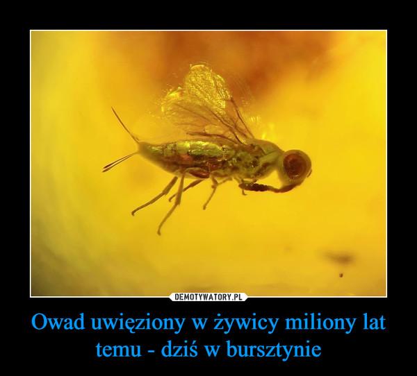 Owad uwięziony w żywicy miliony lat temu - dziś w bursztynie –