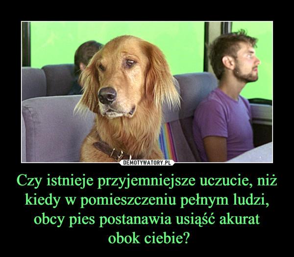 Czy istnieje przyjemniejsze uczucie, niż kiedy w pomieszczeniu pełnym ludzi, obcy pies postanawia usiąść akurat obok ciebie? –