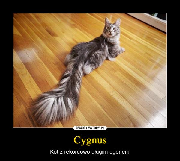Cygnus – Kot z rekordowo długim ogonem