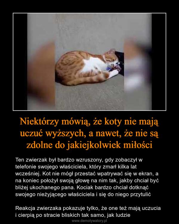 Niektórzy mówią, że koty nie mają uczuć wyższych, a nawet, że nie są zdolne do jakiejkolwiek miłości – Ten zwierzak był bardzo wzruszony, gdy zobaczył w telefonie swojego właściciela, który zmarł kilka lat wcześniej. Kot nie mógł przestać wpatrywać się w ekran, a na koniec położył swoją głowę na nim tak, jakby chciał być bliżej ukochanego pana. Kociak bardzo chciał dotknąć swojego nieżyjącego właściciela i się do niego przytulićReakcja zwierzaka pokazuje tylko, że one też mają uczucia i cierpią po stracie bliskich tak samo, jak ludzie