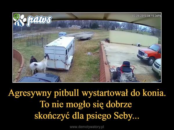 Agresywny pitbull wystartował do konia.To nie mogło się dobrze skończyć dla psiego Seby... –