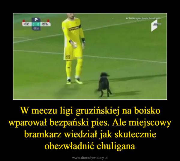 W meczu ligi gruzińskiej na boisko wparował bezpański pies. Ale miejscowy bramkarz wiedział jak skutecznie obezwładnić chuligana –
