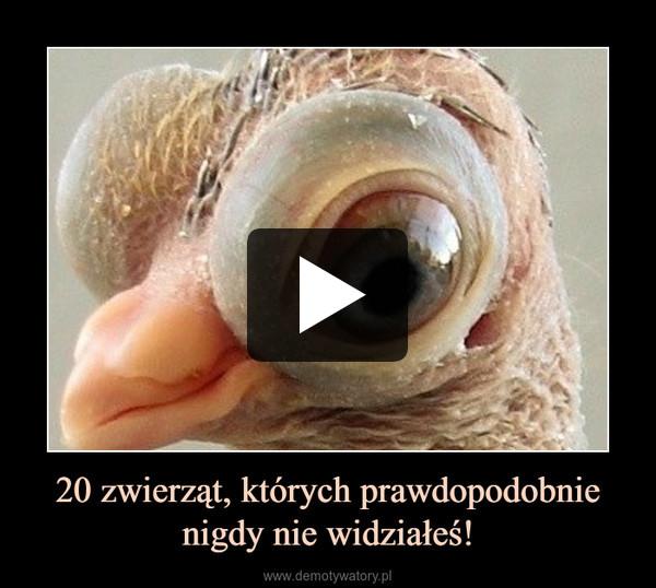 20 zwierząt, których prawdopodobnie nigdy nie widziałeś! –