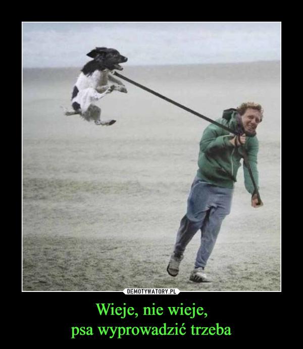 Wieje, nie wieje,psa wyprowadzić trzeba –