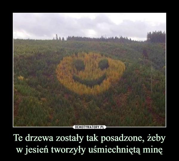 Te drzewa zostały tak posadzone, żebyw jesień tworzyły uśmiechniętą minę –