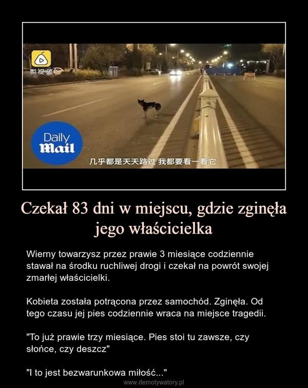 """Czekał 83 dni w miejscu, gdzie zginęła jego właścicielka – Wierny towarzysz przez prawie 3 miesiące codziennie stawał na środku ruchliwej drogi i czekał na powrót swojej zmarłej właścicielki.Kobieta została potrącona przez samochód. Zginęła. Od tego czasu jej pies codziennie wraca na miejsce tragedii.""""To już prawie trzy miesiące. Pies stoi tu zawsze, czy słońce, czy deszcz""""""""I to jest bezwarunkowa miłość..."""""""