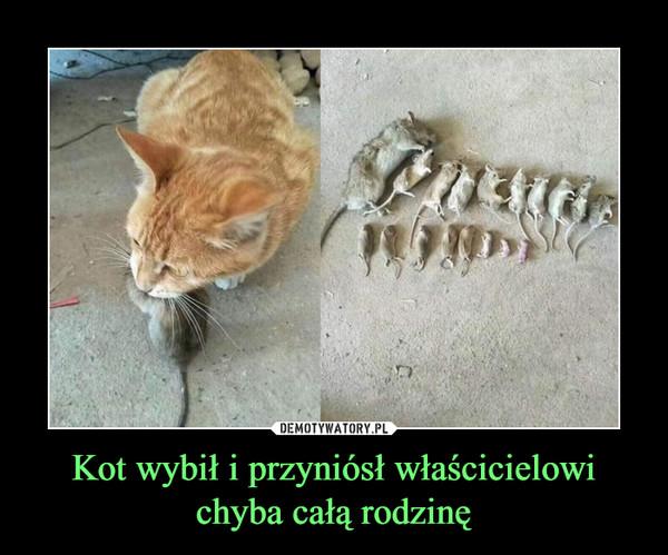 Kot wybił i przyniósł właścicielowi chyba całą rodzinę –