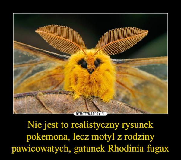Nie jest to realistyczny rysunek pokemona, lecz motyl z rodziny pawicowatych, gatunek Rhodinia fugax –