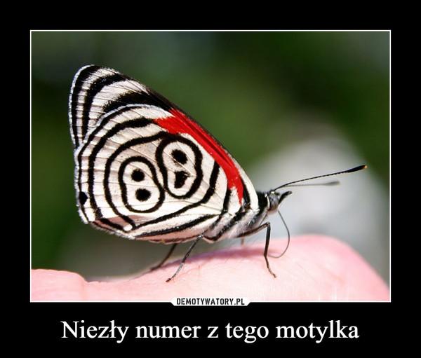 Niezły numer z tego motylka –