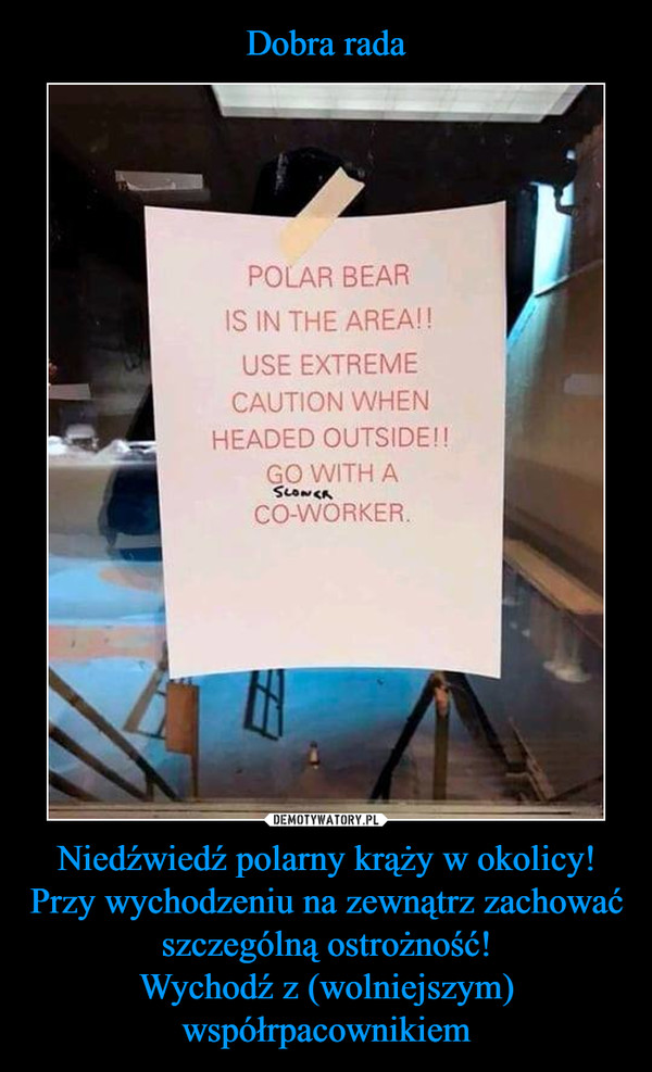Niedźwiedź polarny krąży w okolicy!Przy wychodzeniu na zewnątrz zachować szczególną ostrożność!Wychodź z (wolniejszym) współrpacownikiem –