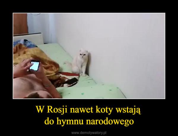 W Rosji nawet koty wstają do hymnu narodowego –