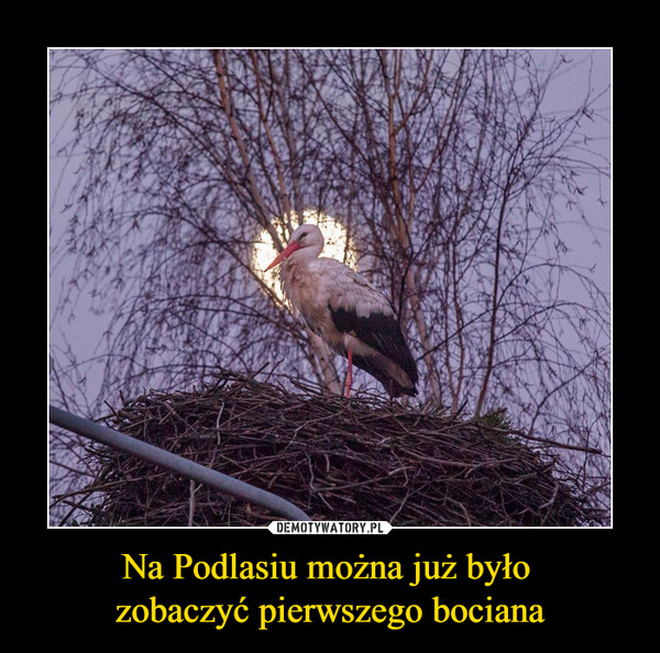 Na Podlasiu można już było zobaczyć pierwszego bociana –