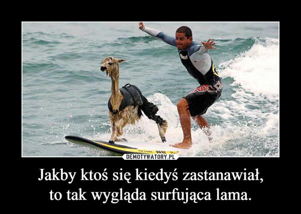 Jakby ktoś się kiedyś zastanawiał,to tak wygląda surfująca lama. –