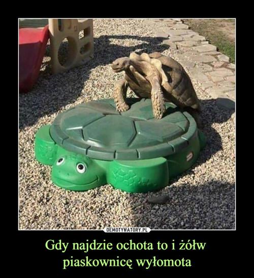 Gdy najdzie ochota to i żółw  piaskownicę wyłomota