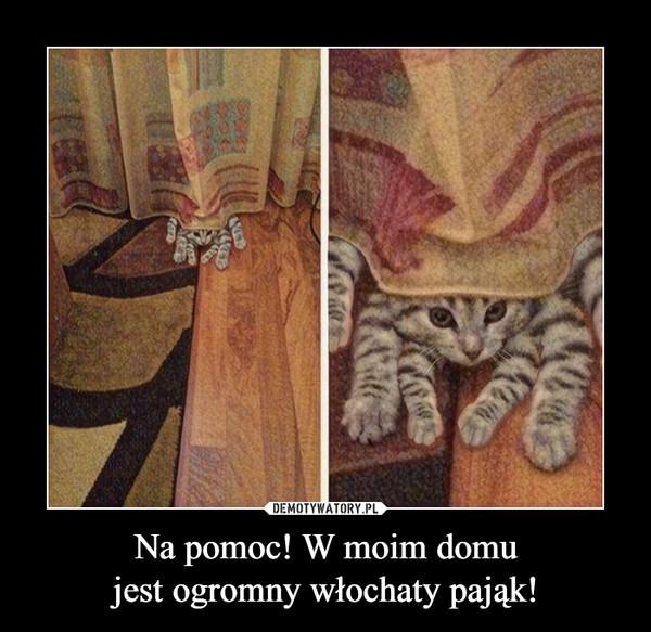 Na pomoc! W moim domujest ogromny włochaty pająk! –