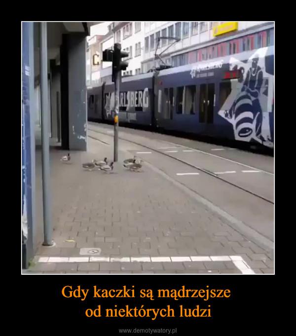 Gdy kaczki są mądrzejsze od niektórych ludzi –