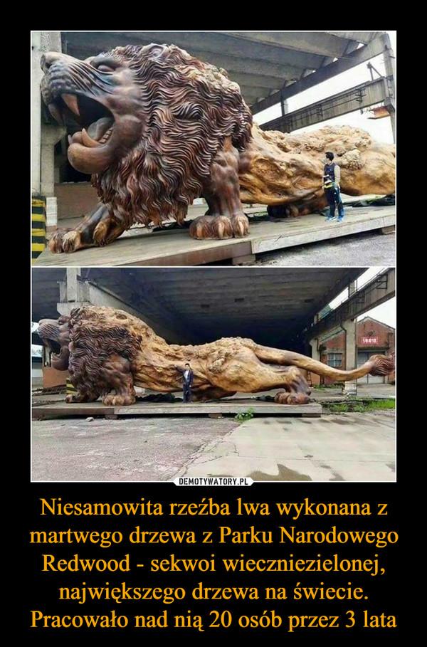 Niesamowita rzeźba lwa wykonana z martwego drzewa z Parku Narodowego Redwood - sekwoi wieczniezielonej, największego drzewa na świecie. Pracowało nad nią 20 osób przez 3 lata –