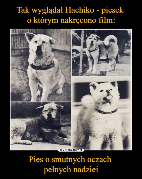 Pies o smutnych oczach pełnych nadziei –