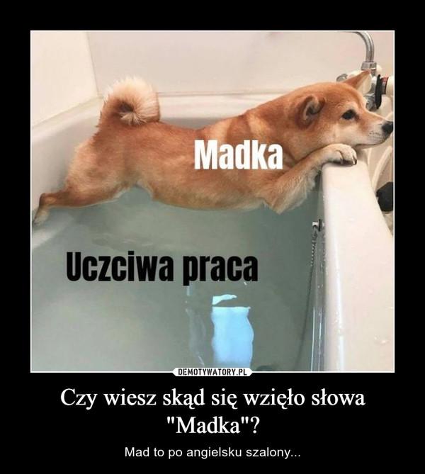 """Czy wiesz skąd się wzięło słowa """"Madka""""? – Mad to po angielsku szalony..."""