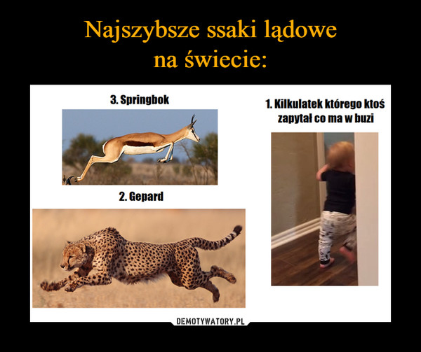 –  3. Springbok 2. Gepard 1. Kilkulatek którego ktoś zapytał co ma w buzi